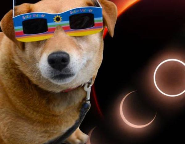 Animals During The Eclipse
