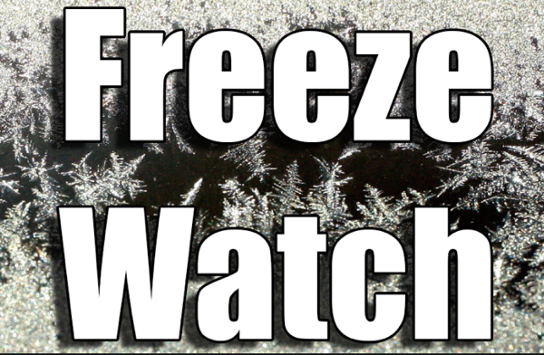 Freeze Watch Issued for Thursday Night for Stoddard County